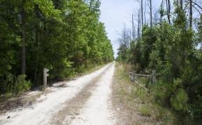 Wilson County 02