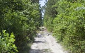 Wilson County 14