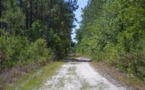 Wilson County 17