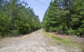 Wilson County 20