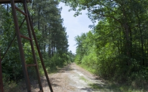 Wilson County 21