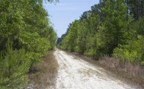 Wilson County 24