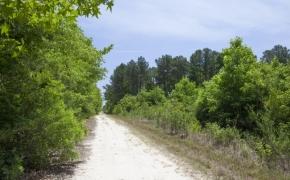Wilson County 26