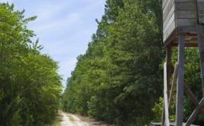 Wilson County 29