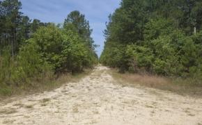 Wilson County 3