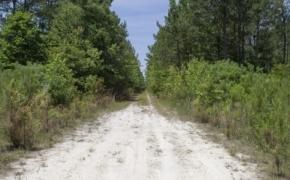 Wilson County 33