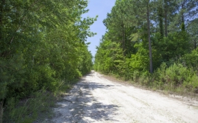 Wilson County 4