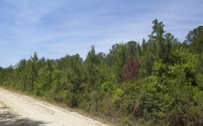 Wilson County 7