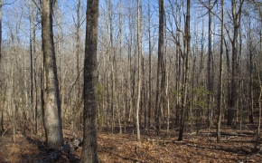 bottomland-1