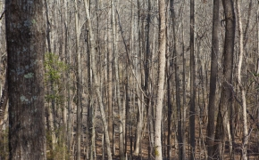 bottomland-2