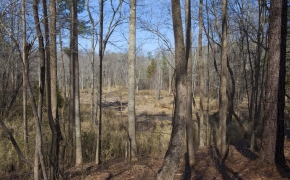 bottomland-3