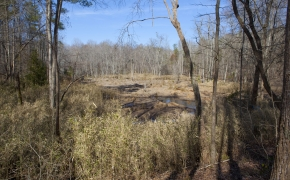 bottomland-4