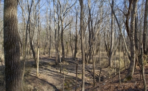 bottomland-5