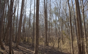 bottomland-6