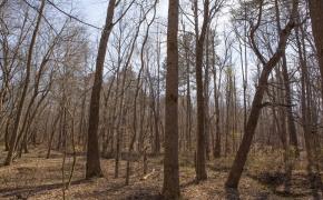 hardwoods-1