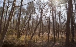 hardwoods-3