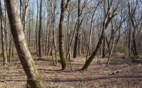 hardwoods-4