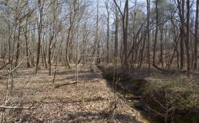 hardwoods-creek