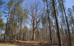 timber-6
