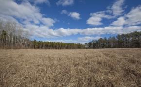 Fields28