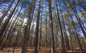 Timber 10