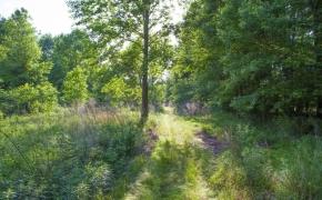 354 Acres on Dickens 1.jpg