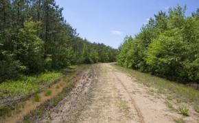 372 Acres in Halifax County 11.jpg