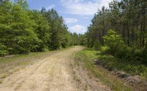 372 Acres in Halifax County 12.jpg