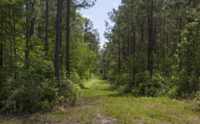 372 Acres in Halifax County 13.jpg
