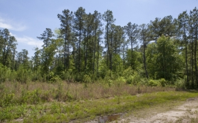 372 Acres in Halifax County 14.jpg