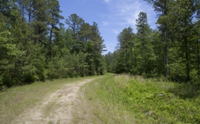 372 Acres in Halifax County 16.jpg