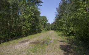 372 Acres in Halifax County 17.jpg
