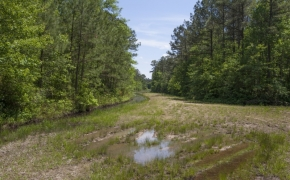 372 Acres in Halifax County 18.jpg
