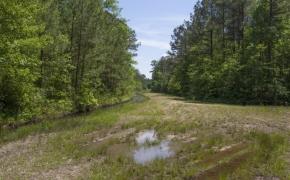 372 Acres in Halifax County 18.jpg