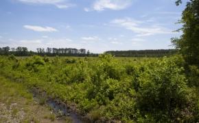 372 Acres in Halifax County 2 .jpg