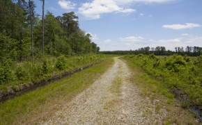 372 Acres in Halifax County 3.jpg
