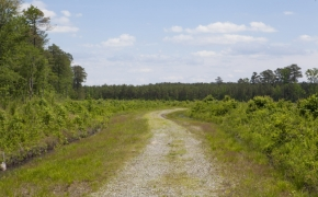 372 Acres in Halifax County 4.jpg