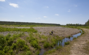 372 Acres in Halifax County 5.jpg