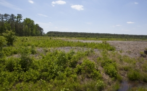 372 Acres in Halifax County 6.jpg