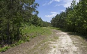 372 Acres in Halifax County 8.jpg
