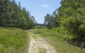 372 Acres in Halifax County 9.jpg