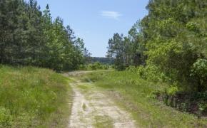 372 Acres in Halifax County 9.jpg
