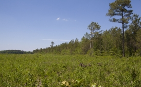 372 Acres in Halifax County22.jpg