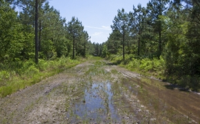 372 Acres in Halifax County26.jpg