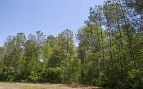 372 Acres in Halifax County27.jpg