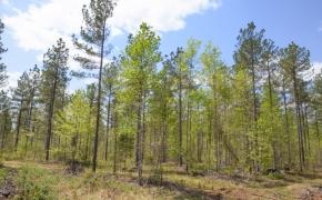 Timber 11.jpg