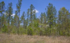 Timber 13.jpg
