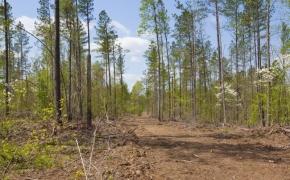 Timber 2.jpg