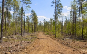 Timber 6.jpg