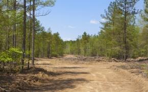 Timber 7.jpg
